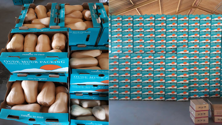 vegetable-export-butternut-oude-muur-packing-south-africa-2020-15
